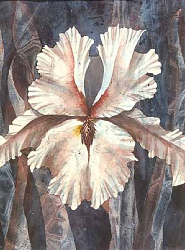 AM Stockhill, Iris, watercolor