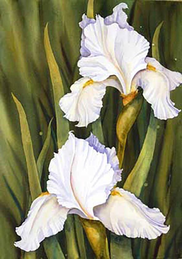 AM Stockhill, Twin Irises, watercolor